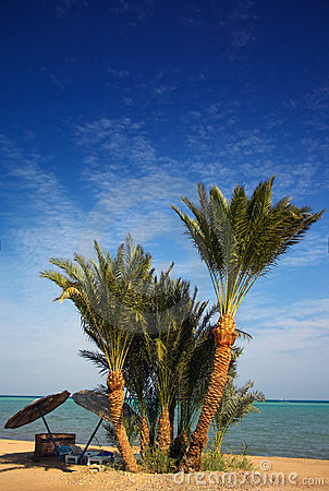 Het paradijsstrand van de palm