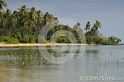 Het paradijsstrand van de palm bij het Eiland van het Konijn