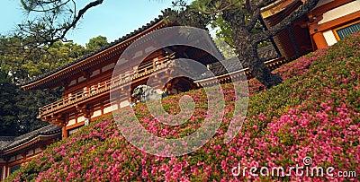 Het Park van Maruyama in Gion - Japan