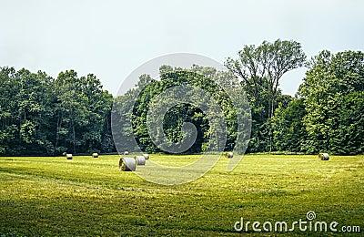 Het Park van Monza