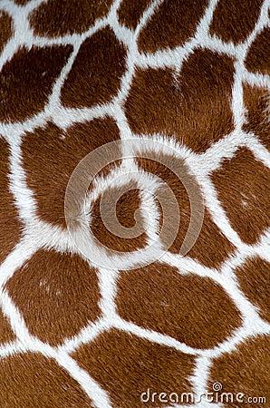 Het patroon van de giraf