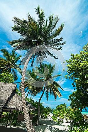 Het perfecte tropische strand van het eilandparadijs