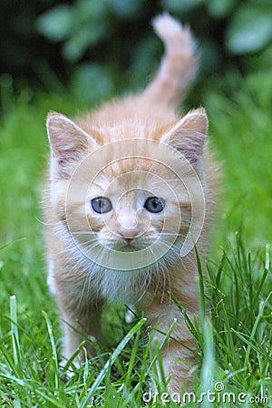 Het portret van de kat