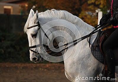 Het portret van het paard