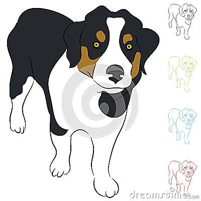 Het Puppy van de Collie van de grens