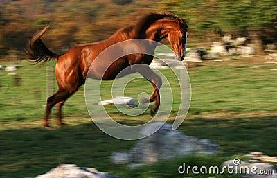 Het rennen paard