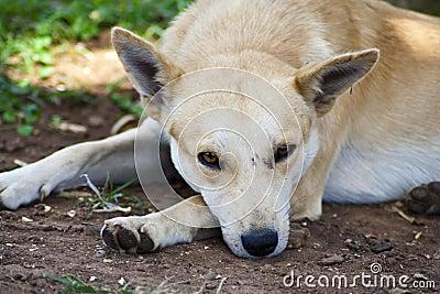 Het rusten van de hond