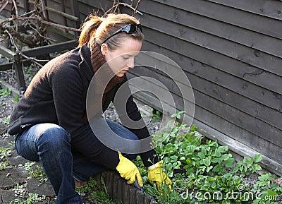 Het schoonmaken van de lente in tuin