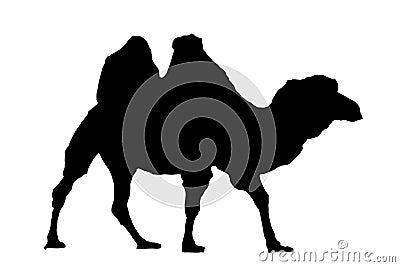 Het silhouet van de kameel