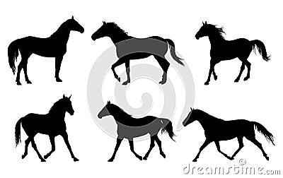 Het silhouet van het paard