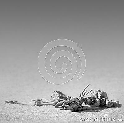 Het skelet van de elandantilope in woestijn