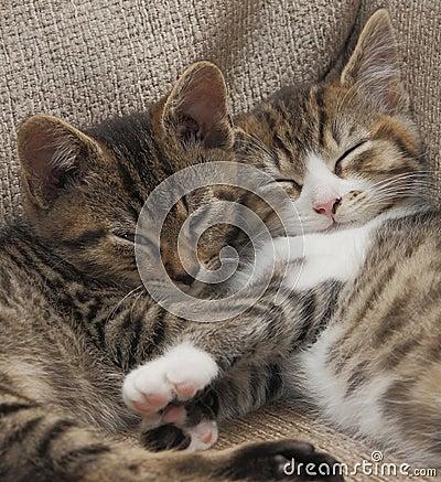 Het slapen tabby katjes