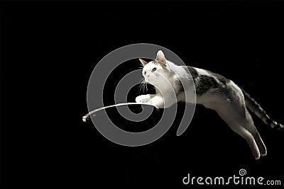 Het springen Kat