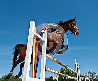 Het springen van het paard