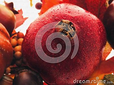 Het Stilleven van de granaatappel