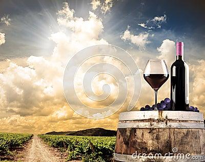 Het stilleven van de wijn tegen wijngaard