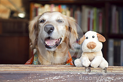 Het stuk speelgoed van de hond en van de vriendenhond