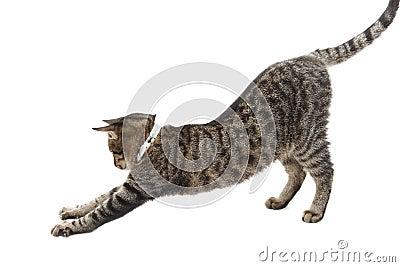 Het uitrekken zich kat