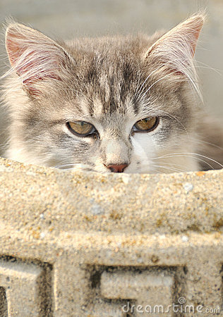Het verbergen van de kat