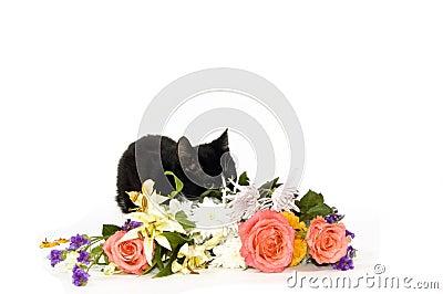 Het verbergen van het katje achter bloemen