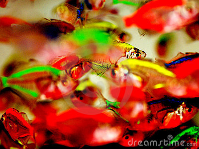 Het verblinden tropische vissen