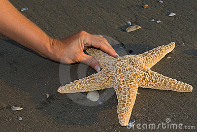 Het vinden van een Seastar