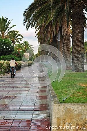 Het water geven van palmsteeg
