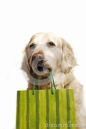 Het winkelen van de hond