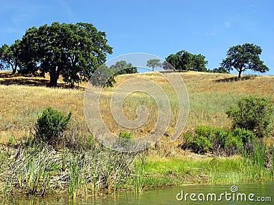 Heuvels van Californië (2)