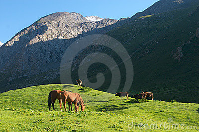The hi-altitude pasture in Kyrgyzstan