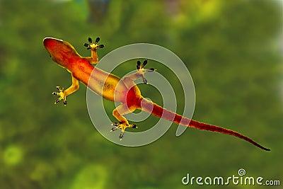 Hi Five Gecko
