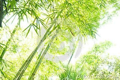 Hi key bamboo