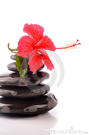 Free Hibiscus Royalty Free Stock Photography - 10615387