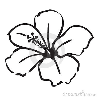 Hibiscus flower simple line drawing vector illustration isolated on ...