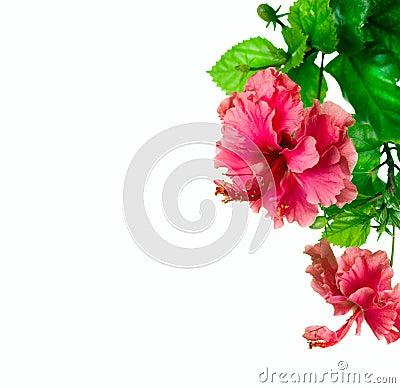 Hibiscus border Design