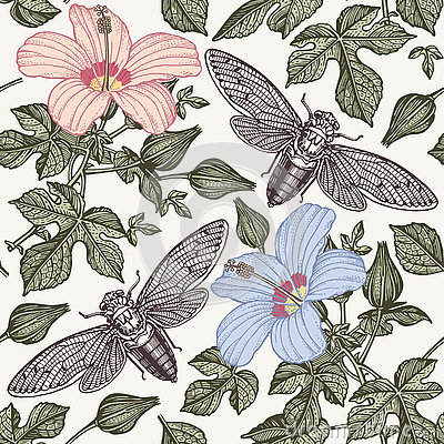 Free Hibiscus Cicadas. Flowers Mallow Insects Fauna. Seamless Textile Background. Drawing Engraving. Freehand Isolated Realistic. Royalty Free Stock Photography - 80434787