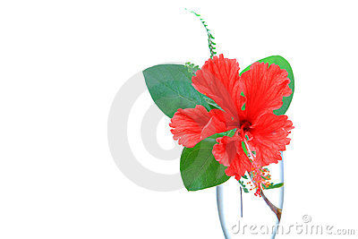 Hibiscus flower beauty