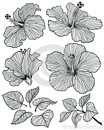 Free Hibiscus Flower Set Royalty Free Stock Image - 52644476