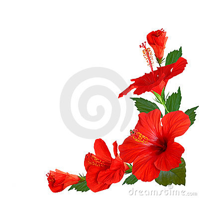 Free Hibiscus Flowers Royalty Free Stock Image - 20956036