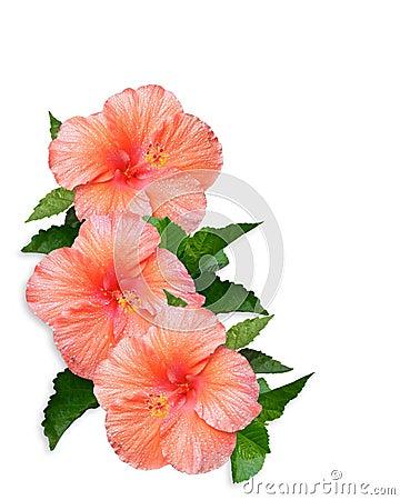 Hibiscus Flowers Border