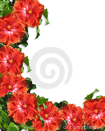Free Hibiscus Flowers Border Background Royalty Free Stock Images - 8900999