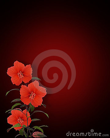 Free Hibiscus Flowers Red And Black Royalty Free Stock Images - 6592789