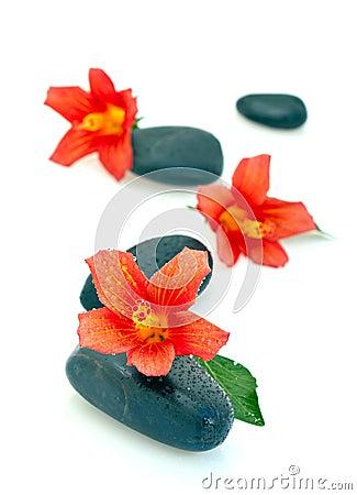 Hibiscus flowers on spa stones