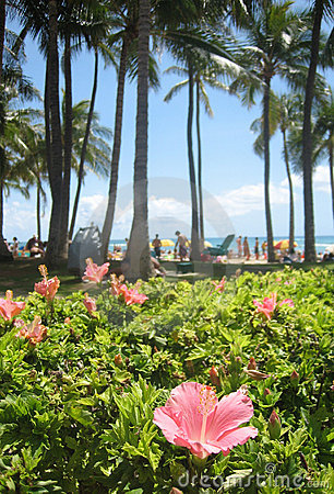 Hibiscus Hawaii 07