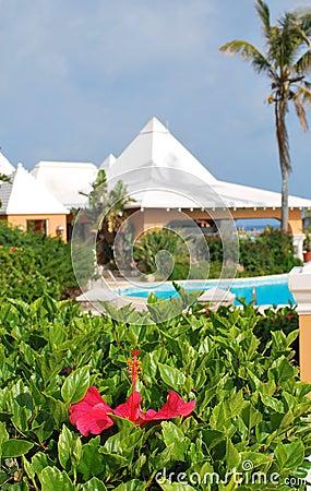 Hibiscus and resort pool