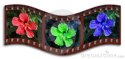 Hibiscus RGB filmstrip