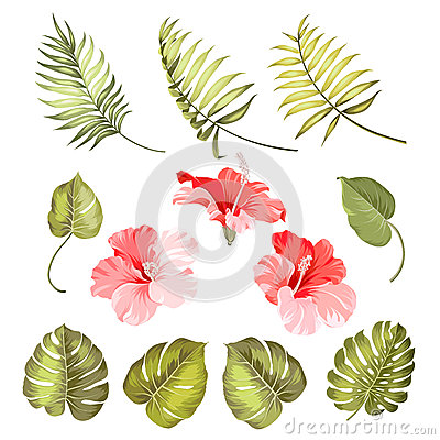 Free Hibiscus Single Tropical Flower Stock Image - 55783261