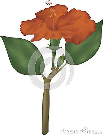 Hibiscus and stem