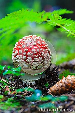 Hidden Beauties Deep in the Forests