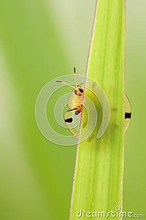 Free Hidden Bug Stock Photos - 15659793